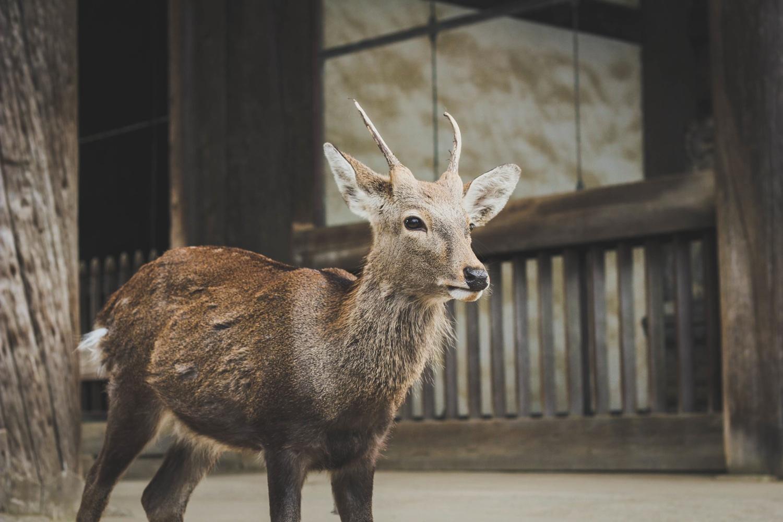 An Ibex
